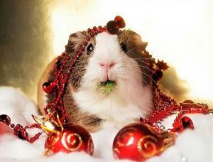 10 Adorable Christmas Animals [beautiful photography]